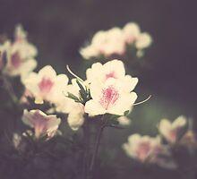 Vintage Pink Flowers by Andreka