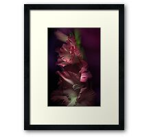 One pink Gladiola Framed Print