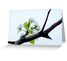 Early Spring Blossoms 2012 Greeting Card