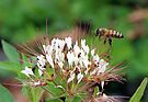 Honey Bee Gathering, Dunrobin Ontario by Debbie Pinard