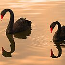 Synchronized Swimming ! by jozi1