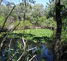 Peaceful Lagoon with Lillies by wysiwyg-aust