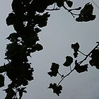 Grey Shadows Of Leaves by iosifskoufos