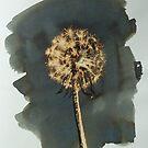dandelion glow by Hannah Clair Phillips