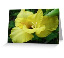 a beautiful flower of gladiolus Greeting Card
