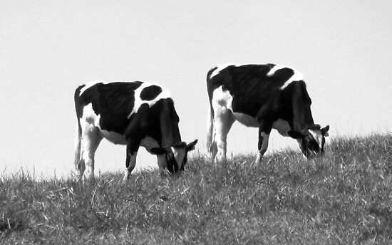 Synchronized Grazing by Jean Gregory  Evans