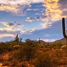 The Sonoran Desert  by Saija  Lehtonen