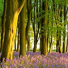 Bluebells at sunrise by Chris Tarling
