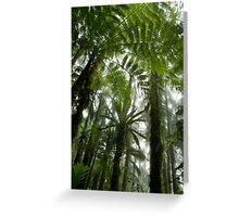 Foggy Tree Fern Forest - Pohnpei, Micronesia Greeting Card