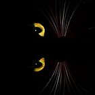 Black Cat - Horizontal by sandnotoil