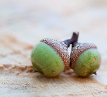 Acorns by William Fehr