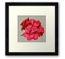 Red flower silhouette  Framed Print