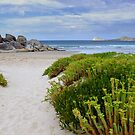 Wilson's Promontory Victoria Australia by Janette Rodgers