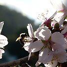 Among the Blossom by DEB CAMERON