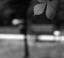 Empty Bench by Dariusz Gudowicz
