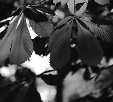 Chestnut Leaves by Dariusz Gudowicz