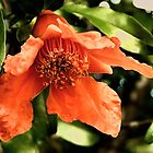 Orange Pomegranate Flower by Sharon Woerner