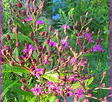 Ironweed in the Garden by TrendleEllwood