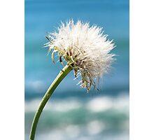 dandelion sea Photographic Print