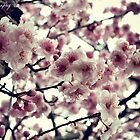 Winter Blossoms by Zoe Harris