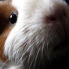 Rambo - guinea pigs by Enri-Art