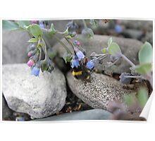 Nesten blomster og bier Poster
