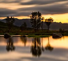 Tree reflections by Frank Olsen