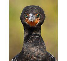 Cormorant Attitude Photographic Print