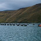 Kenepura Sound and Green Mussel Farming by Yukondick