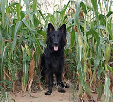 Phoenix in the Cornfield by Sandy Keeton