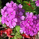 Pink Verbena Beauties by kathrynsgallery