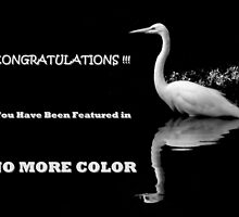 FEATURED BANNER NO MORE COLOR by artisandelimage