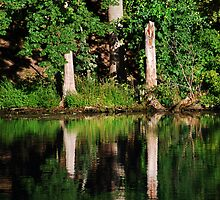 Three Tree Reflections  by Laurie Minor
