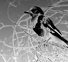 Quoth The Butcher Bird by Donuts