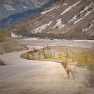 Along the Icefields Parkway by Dyle Warren