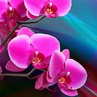Phalaenopsis II - Orchid by Wemmje
