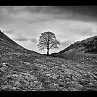 The Sycamore Tree - Hadrians Wall by Wayman