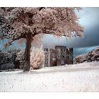 Dreams - Infrared by Wayman
