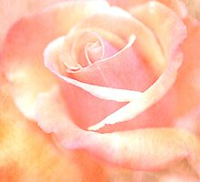Romantic Rose by OpalFire