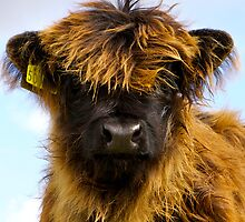 Wee Hairy Coo by Karen Marr