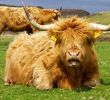 Tongue Hairy Coo by Karen Marr