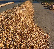 Peanut Peanuts Food by HQPhotos