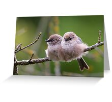 Bushtit Siblings Greeting Card