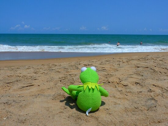 Beach Sea Sea ??view Water Lonely Frog by HQPhotos