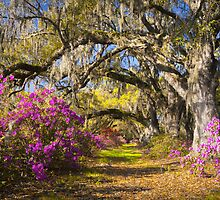Spring Flowers Charleston SC Azalea Blooms Deep South Landscape Photography by Dave Allen