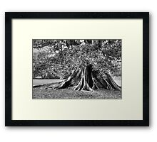 the ROOT of it all Framed Print
