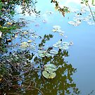 Lilypad Reflections by Jess Meacham