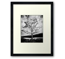 Black and White Alone Dead Tree on the highway Framed Print