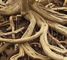 Twisted Tree Roots by -aimslo-