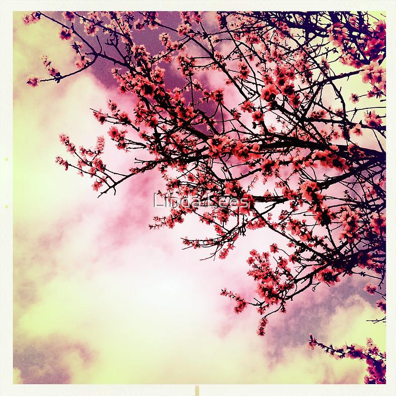 Spring is Near by Linda Lees